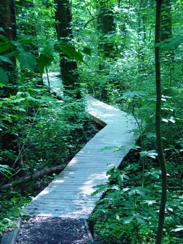 Boardwalk trail through the Cypress Swamp